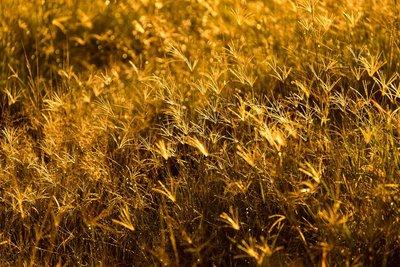 Backlit Grasses 41