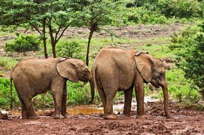 David Sheldrick Elephant Orphange 34