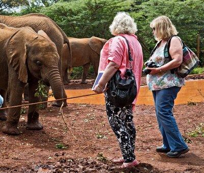 David Sheldrick Elephant Orphange 62