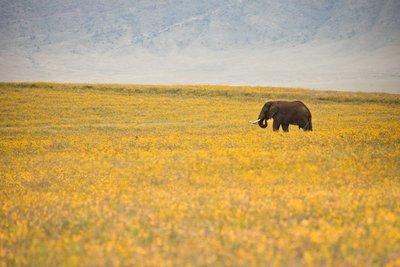 Elephant 67
