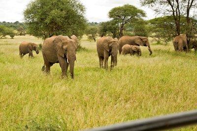 Elephants 801