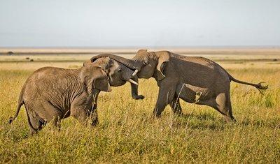 Elephants 805