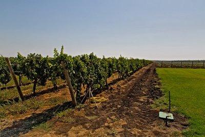 Et Cetera Winery 7