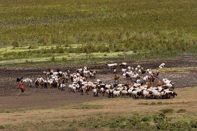 Goats 12-3