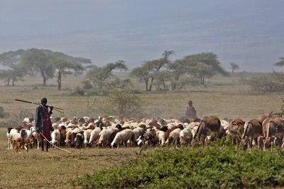 Goats and Donkeys 12-1