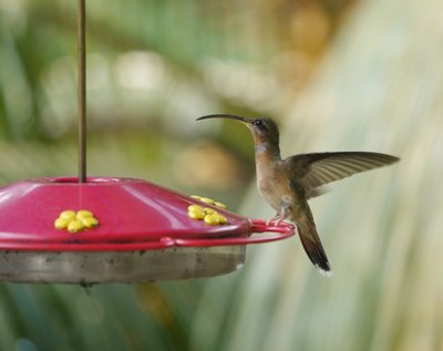Hummingbird_Gallery_2.jpg
