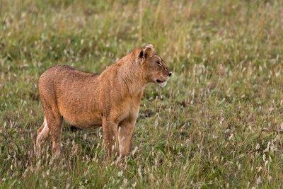 Lions 10-13