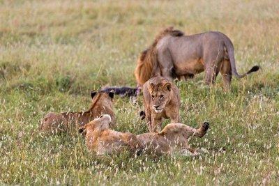 Lions 10-19