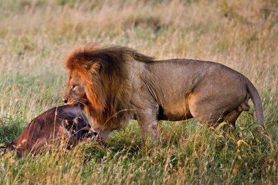 Lions 10-35