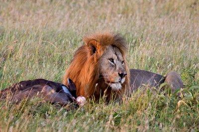 Lions 10-40