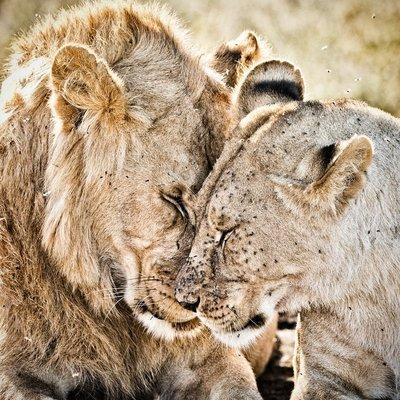 Lions 1111
