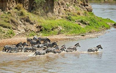 Mara River Crossing (#1) 20