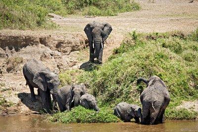 More Elephants 1