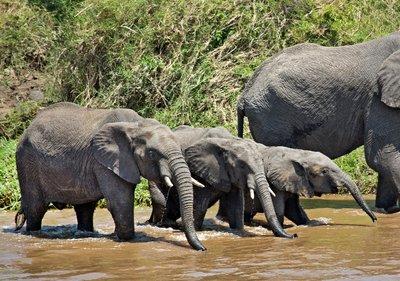 More Elephants 2
