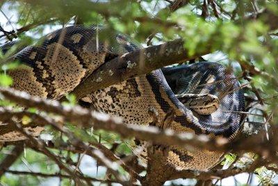 Python, Tree 10-1