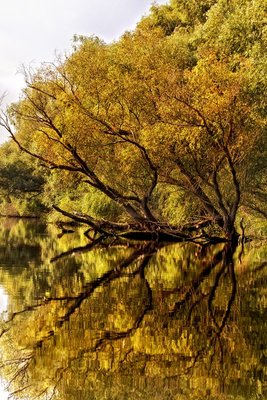 Reflections 54 Nik