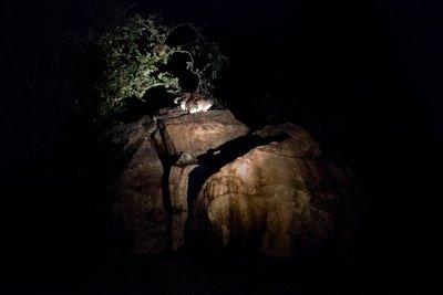 Rock Hyrax at Mbuzi Mawe 9-1