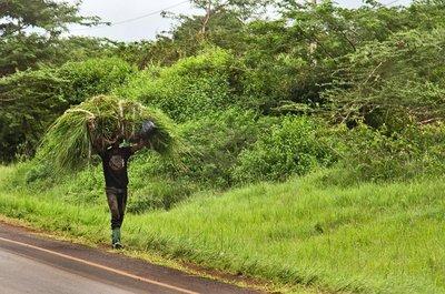 Street Scenes - Carrying Grass 1
