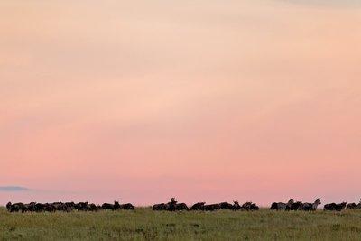 Sunrise over Serengeti 10-2