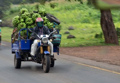 Transporting Bananas 1