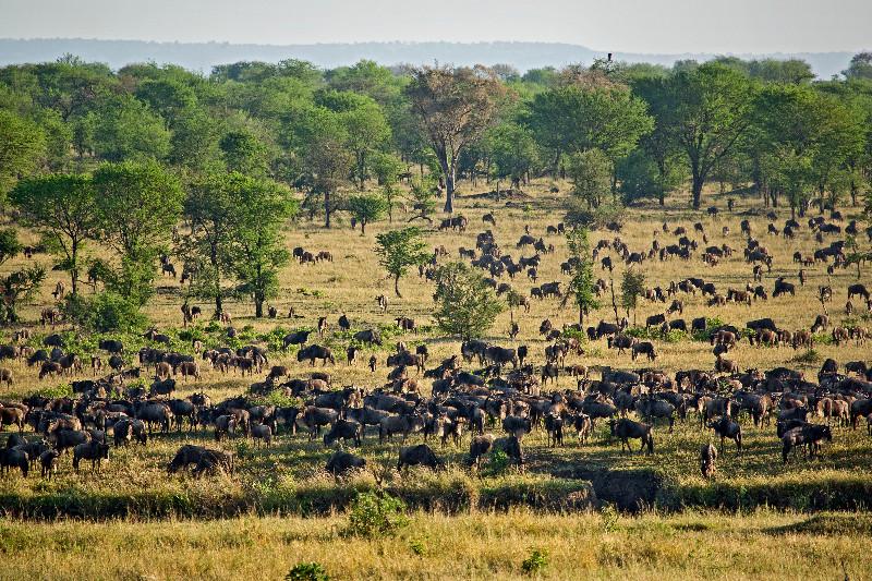 large_Big_Herd_at_Crossing___2.jpg