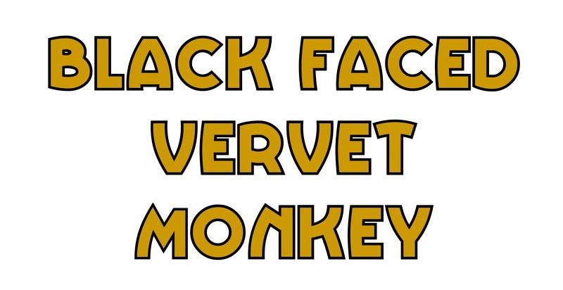 large_Black_Faced_Vervet_Monkey.jpg