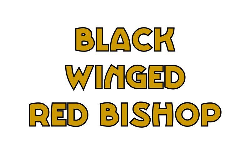 large_Black_Winged_Red_Bishop.jpg