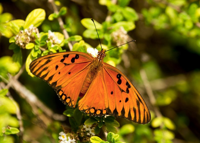 large_Butterfly_2.jpg