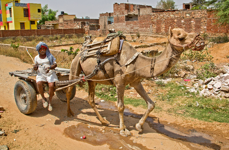 large_Camel_Cart_1.jpg