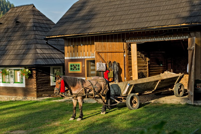 large_Casa_Felic.._a_Horse_28.jpg