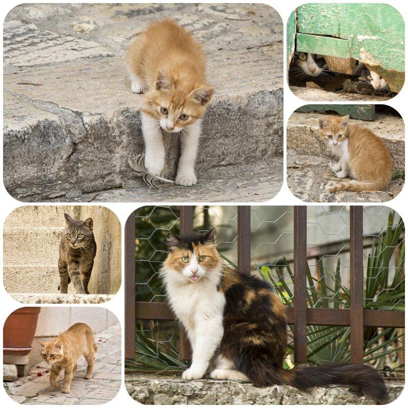 large_Cats.jpg