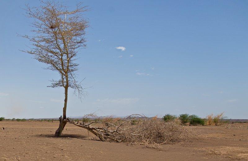 large_Chalbi_Desert_120.jpg