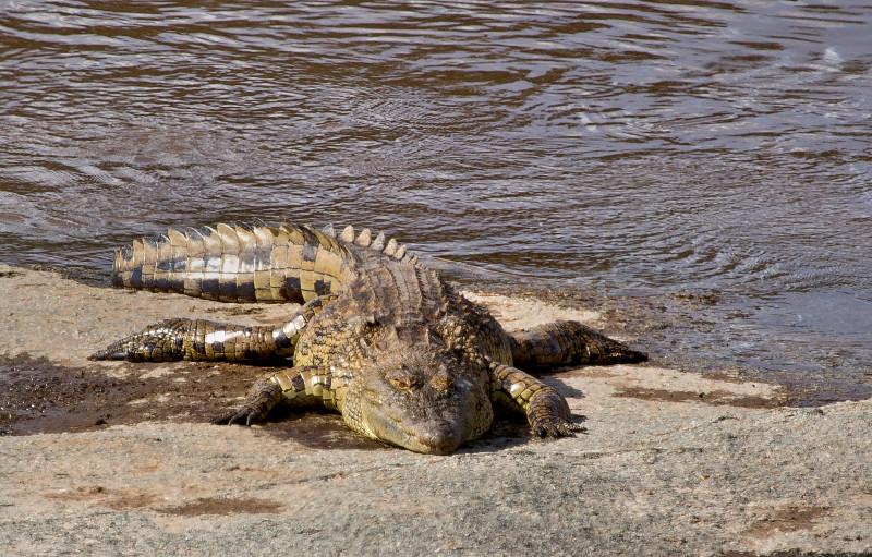 large_Crocodile_74.jpg
