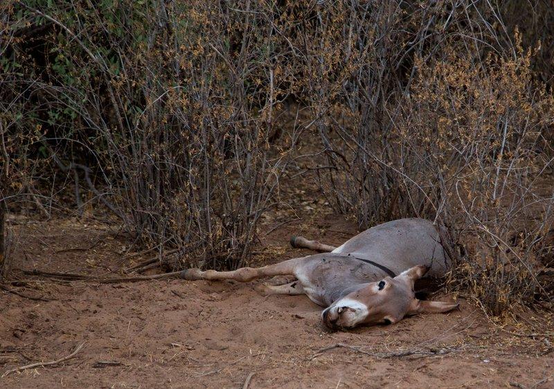 large_Dead_Donkey.jpg