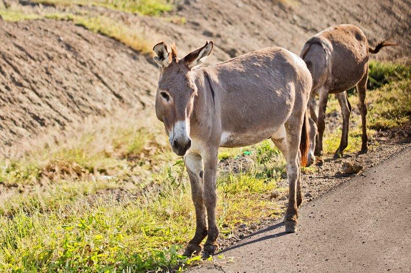 large_Donkey_6-3.jpg