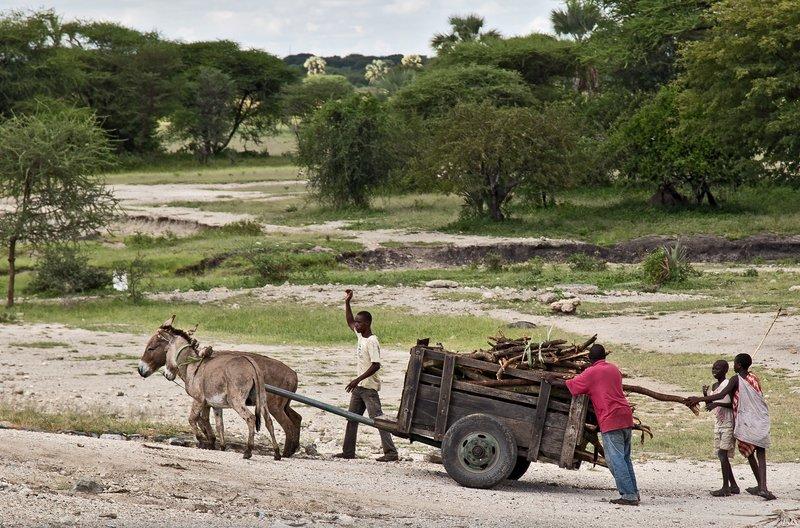 large_Donkey_Cart_2.jpg