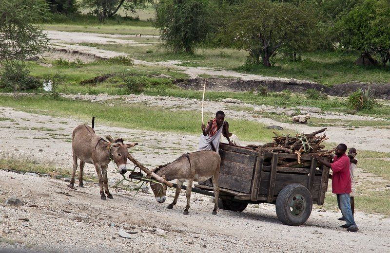 large_Donkey_Cart_4.jpg