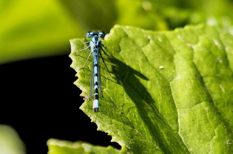 large_Dragonfly_1.jpg