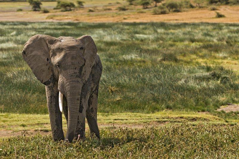large_Elephant_13.jpg