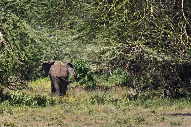large_Elephant_6-2.jpg