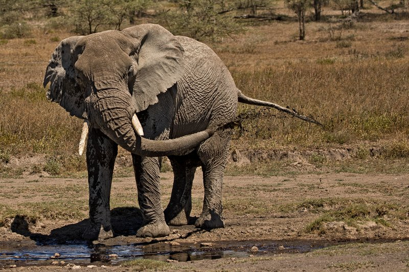 large_Elephant_H.._a_Shower_3.jpg