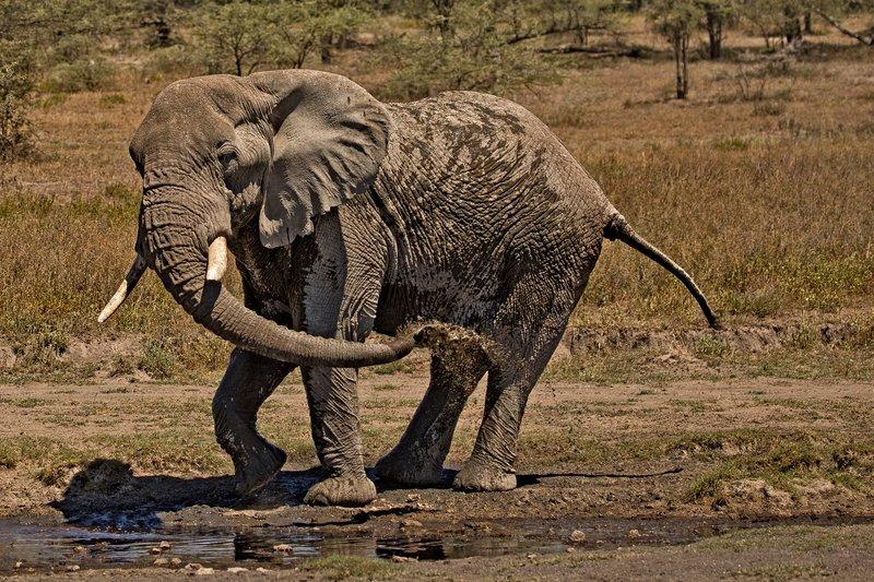 large_Elephant_H.._a_Shower_6.jpg
