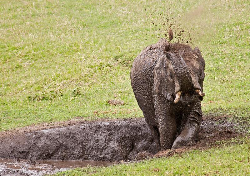large_Elephant_Mud_Bath_3.jpg
