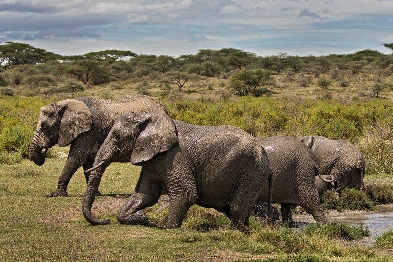 large_Elephant_Mudbath_12.jpg