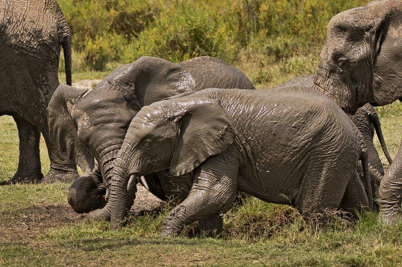 large_Elephant_Mudbath_15.jpg