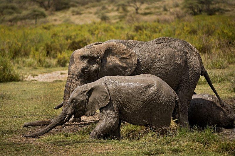 large_Elephant_Mudbath_16.jpg