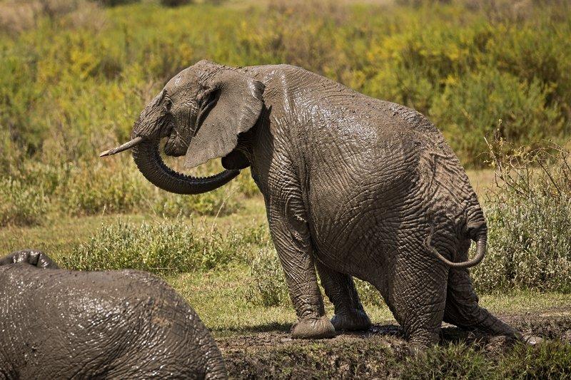 large_Elephant_Mudbath_17.jpg