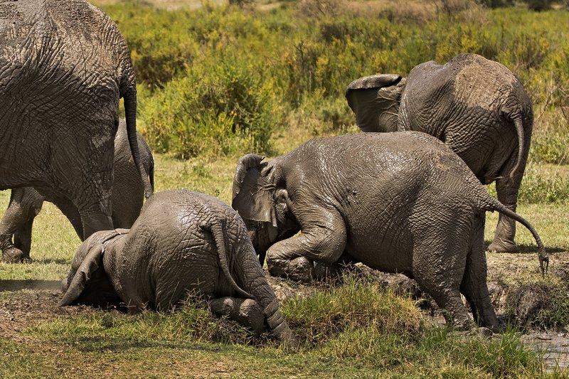 large_Elephant_Mudbath_18.jpg