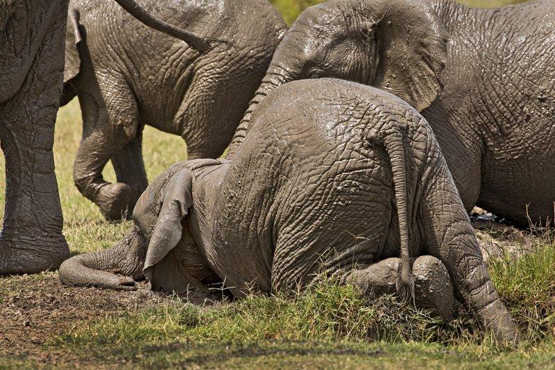 large_Elephant_Mudbath_19.jpg