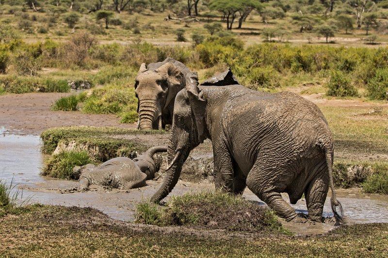 large_Elephant_Mudbath_2.jpg